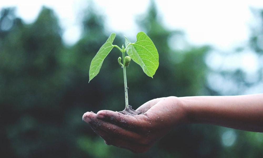 startups impact positif